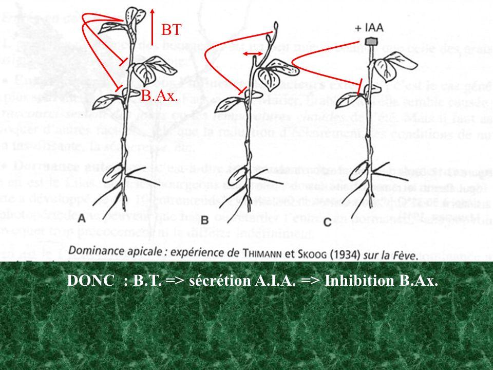 Levée de la dominance Laction de l auxine ici est incompatible avec sa circulation polarisée… Intervention d une balance Auxines / Cytokinines mais aussi d autres hormones notamment l Ethylène… Les feuilles participent au maintien de l inhibition.