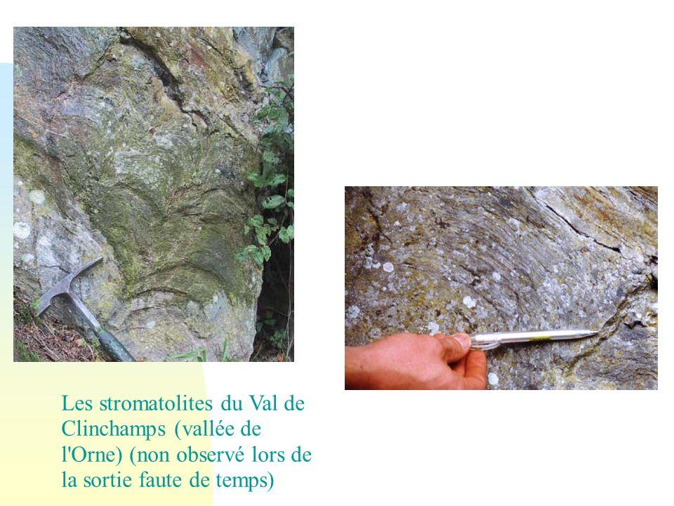 Les stromatolites du Val de Clinchamps (vallée de l Orne) (non observé lors de la sortie faute de temps)