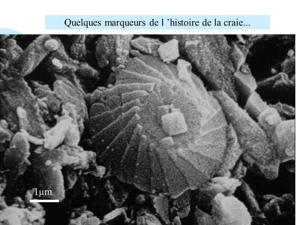 Coccolithophoridé : unicellulaire à test calcaire coccosphère 1µm