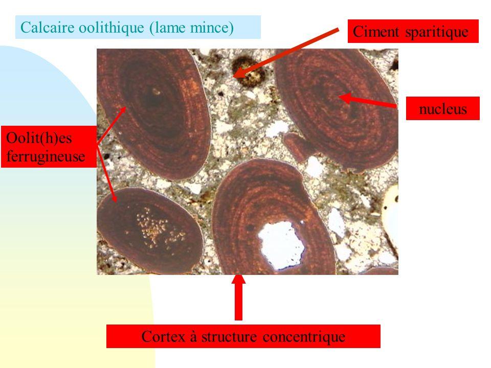 Le tuf observé le long de la vallée de l Orne Détail du tuf, résultat d un précipitation chimique de calcaire au contact des végétaux (mousses)