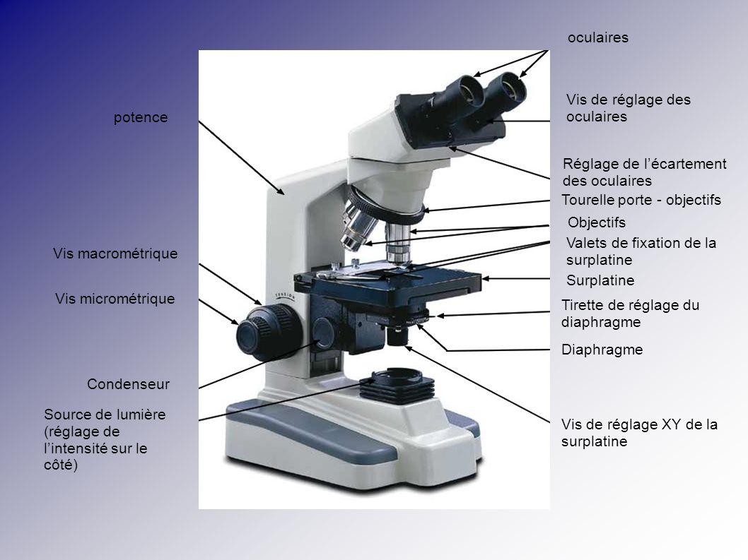 oculaires potence Vis de réglage des oculaires Réglage de lécartement des oculaires Tourelle porte - objectifs Objectifs Valets de fixation de la surp