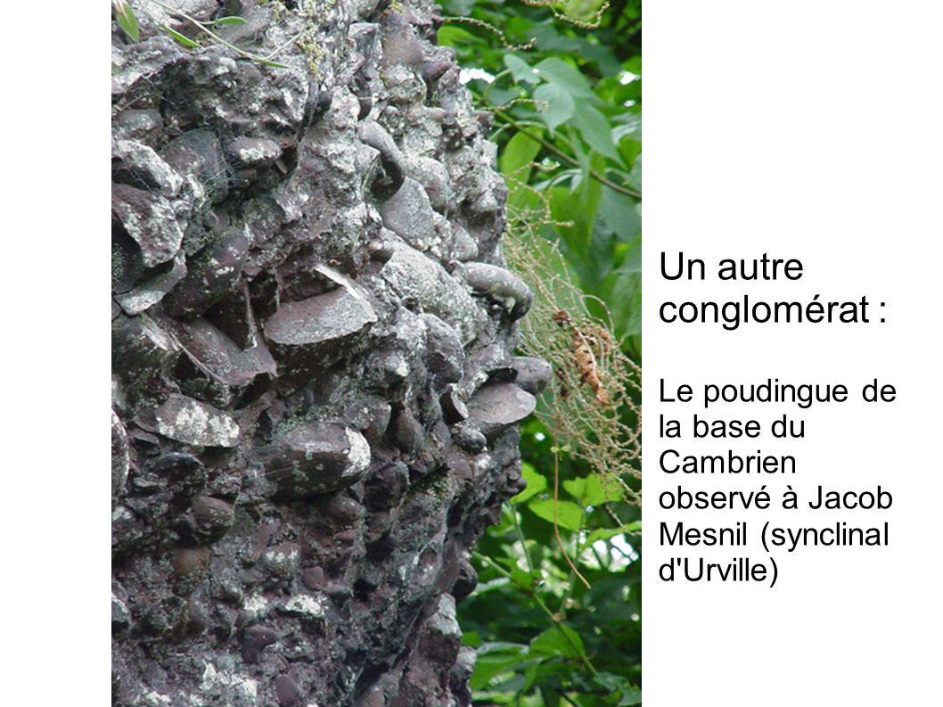 Un autre conglomérat : Le poudingue de la base du Cambrien observé à Jacob Mesnil (synclinal d'Urville)