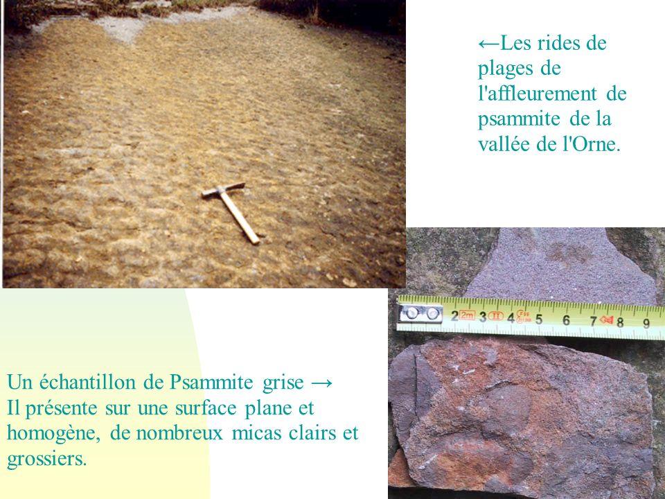 Un échantillon de Psammite grise Il présente sur une surface plane et homogène, de nombreux micas clairs et grossiers. Les rides de plages de l'affleu