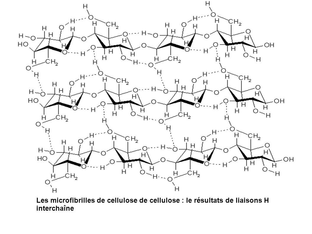 Les microfibrilles de cellulose de cellulose : le résultats de liaisons H interchaîne