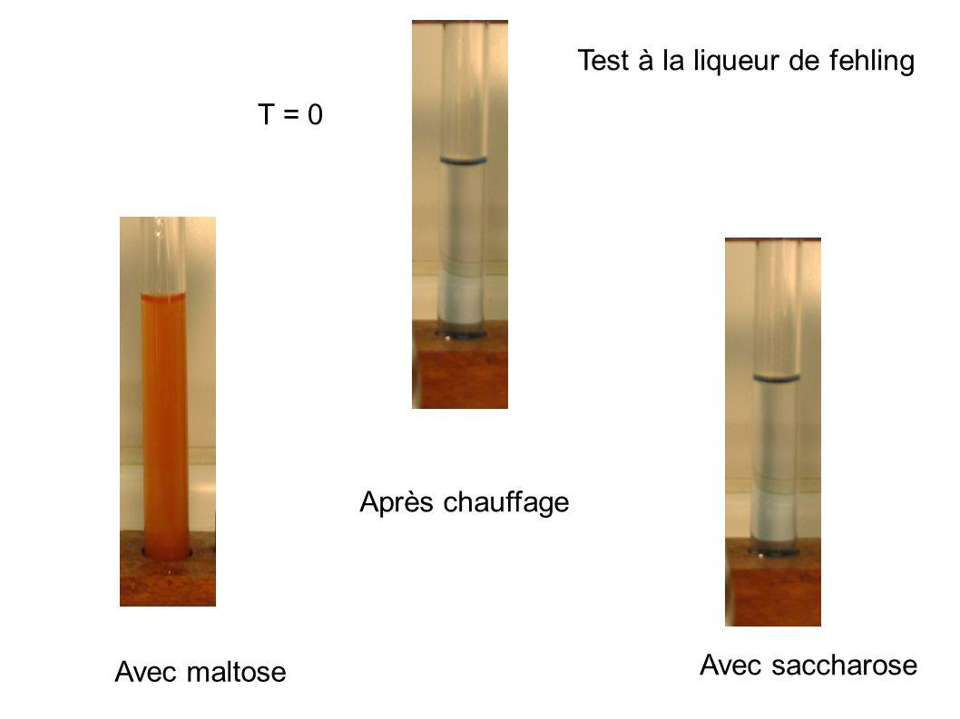 Test à la liqueur de fehling T = 0 Après chauffage Avec maltose Avec saccharose