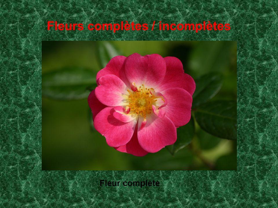 Fleurs complètes / incomplètes Fleur complète