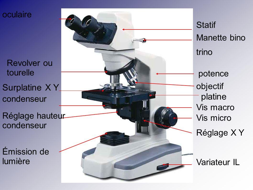 oculaire Émission de lumière Réglage hauteur condenseur condenseur Revolver ou tourelle Variateur IL Réglage X Y Vis micro Vis macro objectif Manette