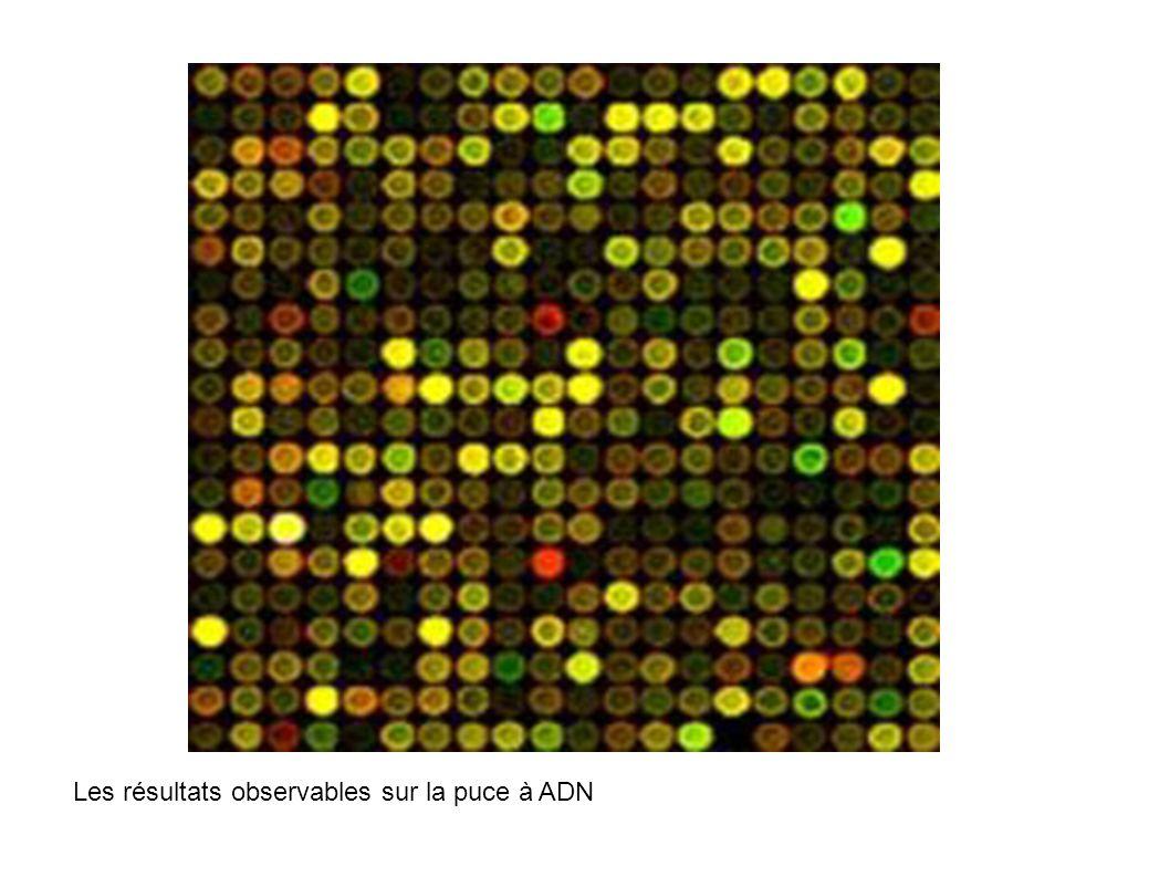 Les résultats observables sur la puce à ADN