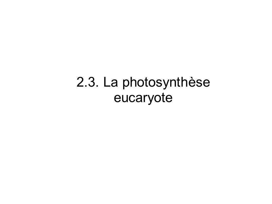 Les cellules réalisant la photosynthèse contiennent un ou des chloroplastes Une cellule de parenchyme chlorophyllien Des cellules d algues dont les chloroplastes ont des formes particulières