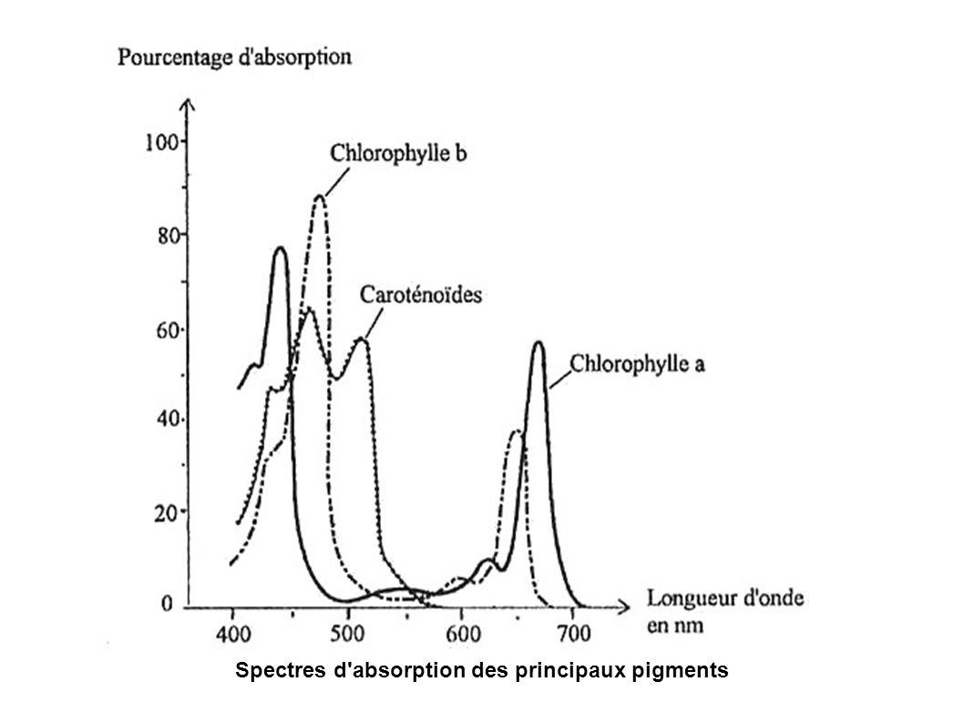 Spectres d'absorption des principaux pigments