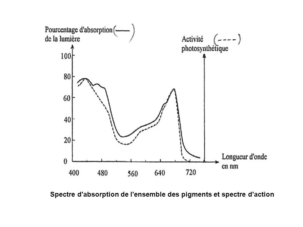 Spectre d'absorption de l'ensemble des pigments et spectre d'action
