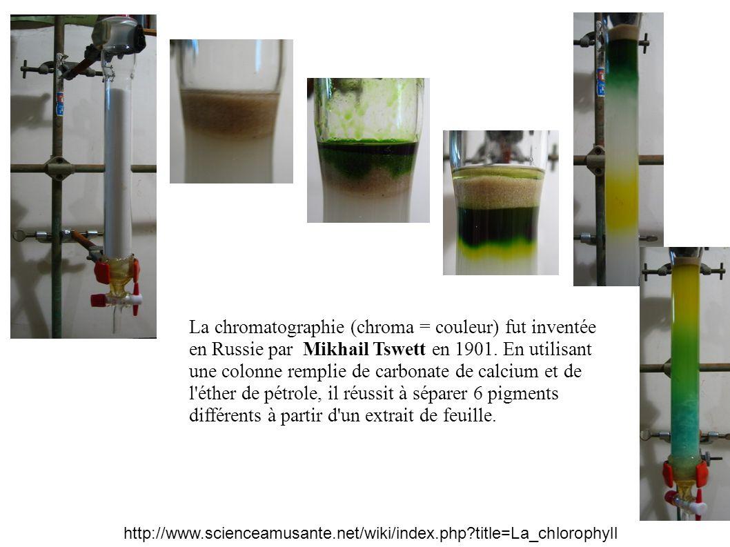 carotène Chlorophylle a (lutéine ?) Chlorophylle b Xanthophylles (violaxanthine et néoxanthine) Résultats de la chromatographie de la solution de pigments (phase stationnaire = amidon, phase mobile = éther de pétrole)