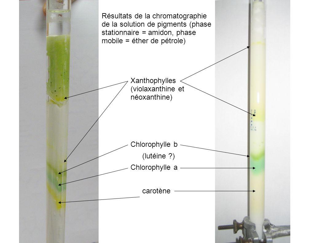 carotène Chlorophylle a (lutéine ?) Chlorophylle b Xanthophylles (violaxanthine et néoxanthine) Résultats de la chromatographie de la solution de pigm