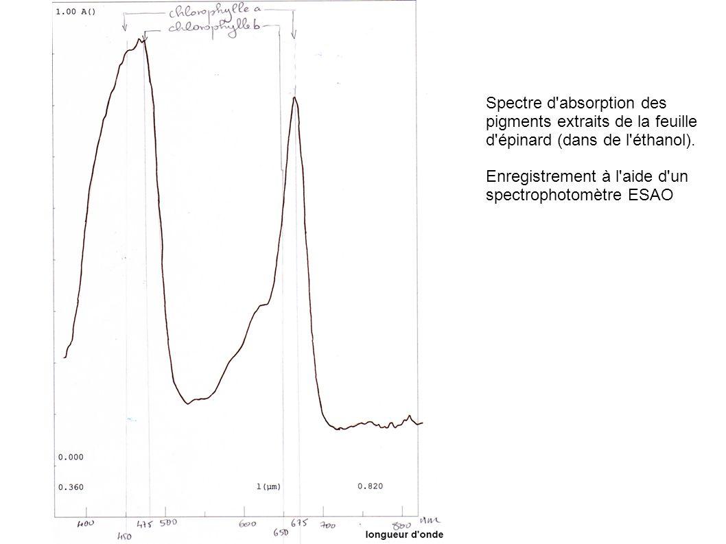 Spectre d'absorption des pigments extraits de la feuille d'épinard (dans de l'éthanol). Enregistrement à l'aide d'un spectrophotomètre ESAO