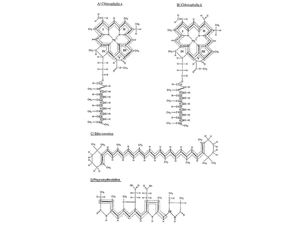 néoxanthine violaxanthine 2 xanthophylles