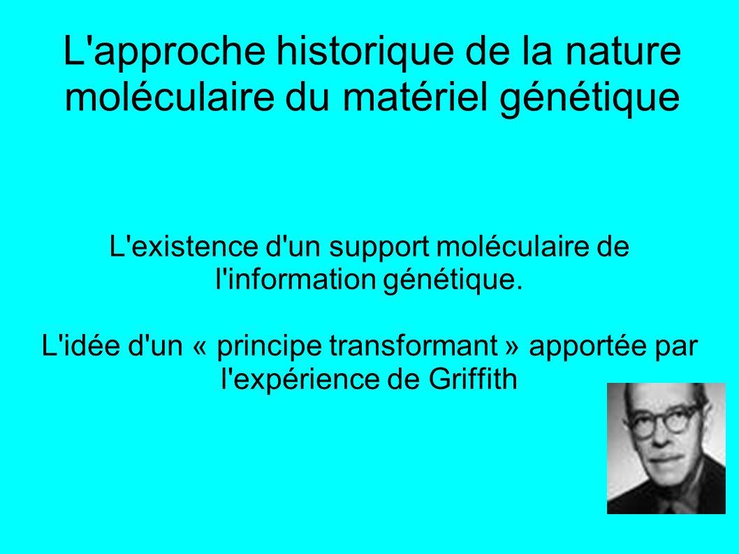 L approche historique de la nature moléculaire du matériel génétique L existence d un support moléculaire de l information génétique.
