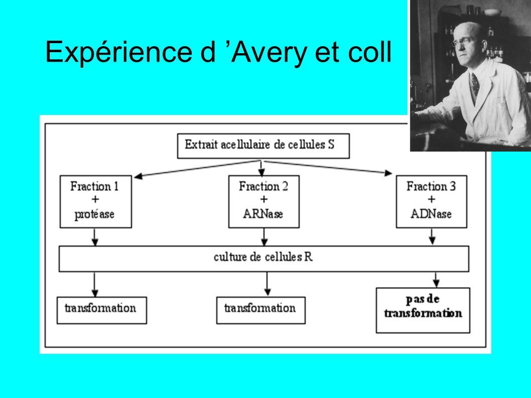 Expérience d Avery et coll