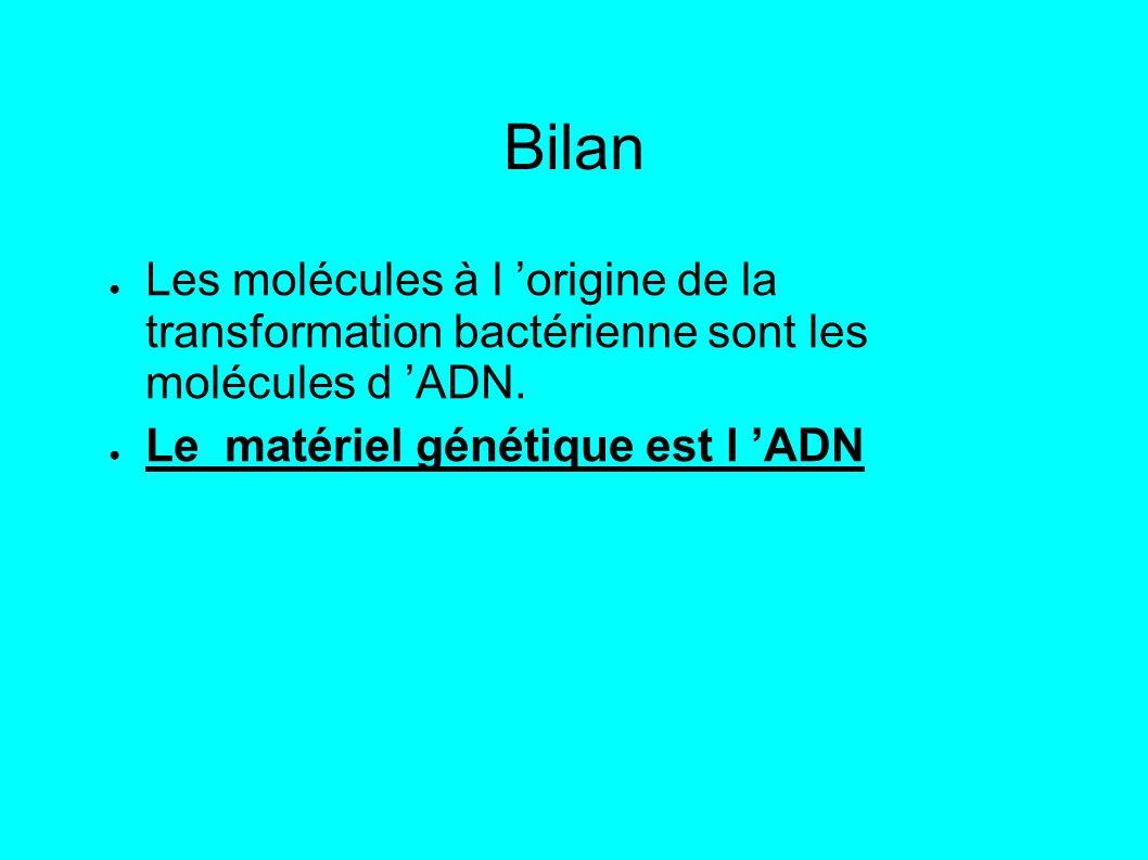 Bilan Les molécules à l origine de la transformation bactérienne sont les molécules d ADN.
