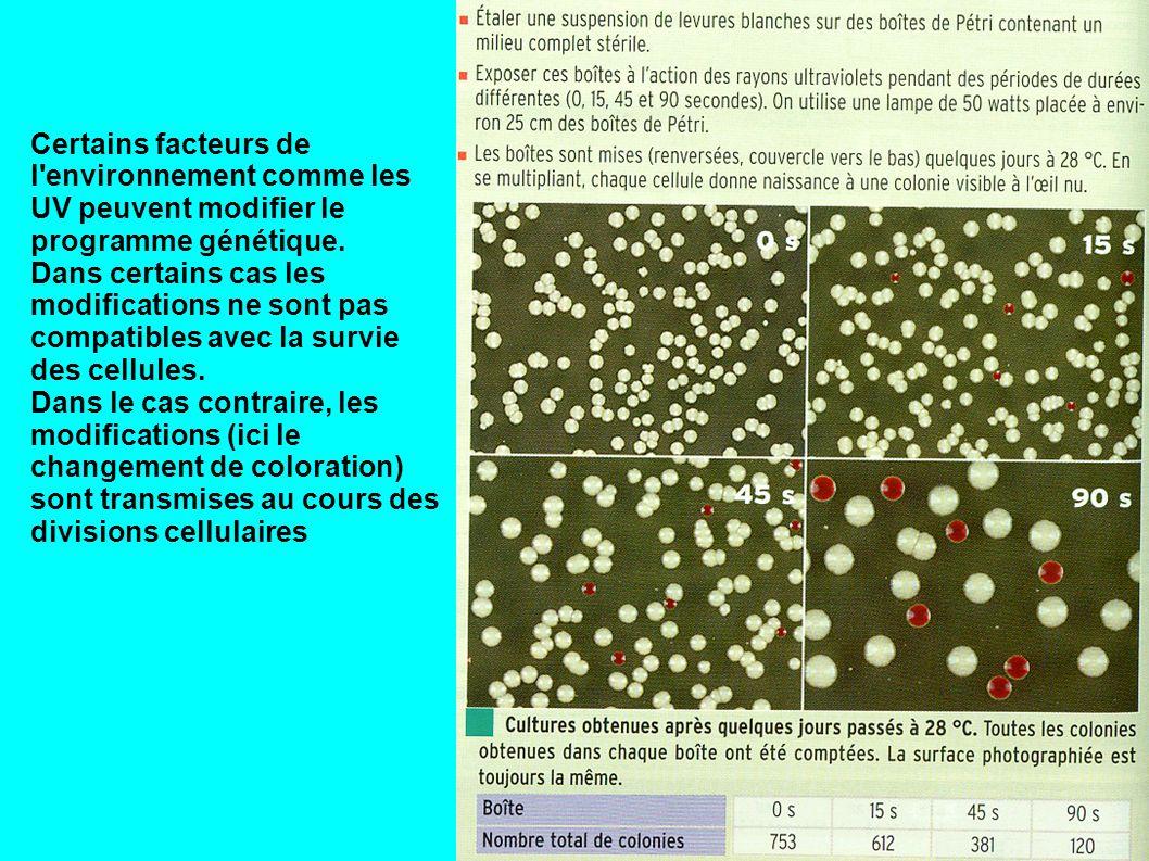 Certains facteurs de l environnement comme les UV peuvent modifier le programme génétique.
