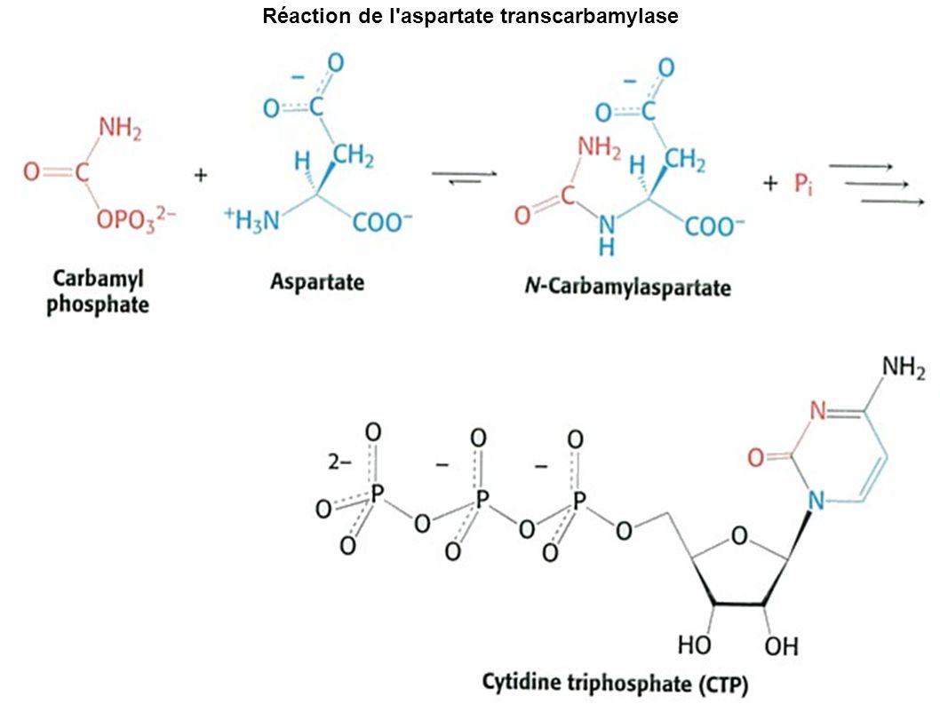 Réaction de l'aspartate transcarbamylase