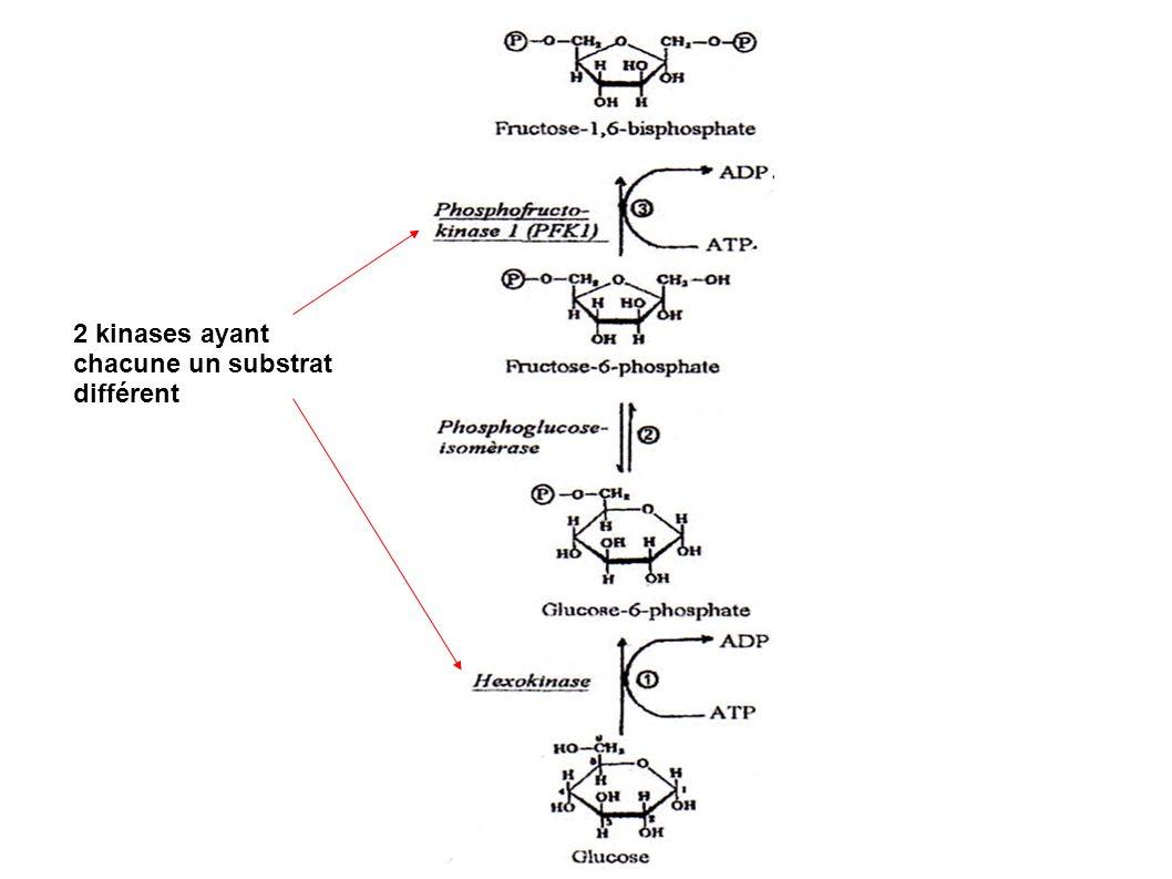 2 kinases ayant chacune un substrat différent