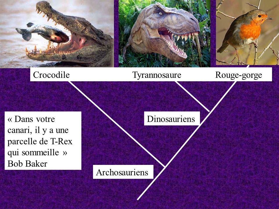 Archosauriens « Dans votre canari, il y a une parcelle de T-Rex qui sommeille » Bob Baker Dinosauriens Crocodile Tyrannosaure Rouge-gorge