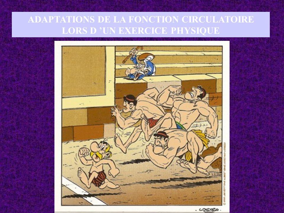 ADAPTATIONS DE LA FONCTION CIRCULATOIRE LORS D UN EXERCICE PHYSIQUE