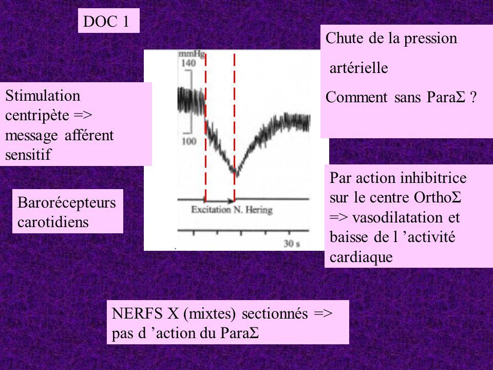 NERFS X (mixtes) sectionnés => pas d action du ParaΣ Stimulation centripète => message afférent sensitif Chute de la pression artérielle Comment sans