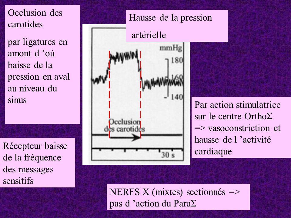 NERFS X (mixtes) sectionnés => pas d action du ParaΣ Occlusion des carotides par ligatures en amont d où baisse de la pression en aval au niveau du si