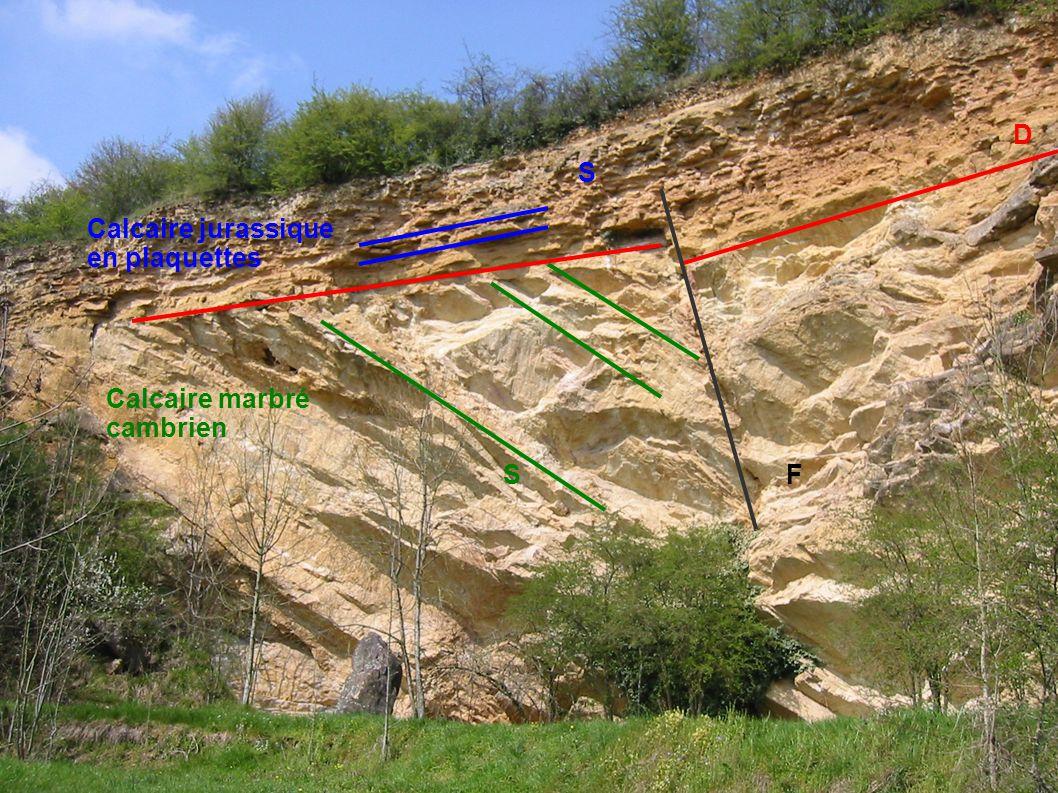 Calcaire jurassique en plaquettes Calcaire marbré cambrien S S D F