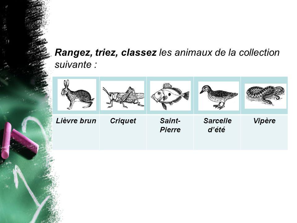 Lièvre brunCriquetSaint- Pierre Sarcelle dété Vipère Rangez, triez, classez les animaux de la collection suivante :