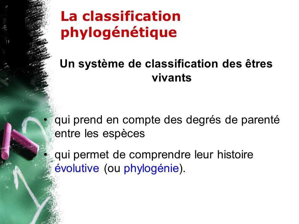 La classification phylogénétique Un système de classification des êtres vivants qui prend en compte des degrés de parenté entre les espèces qui permet