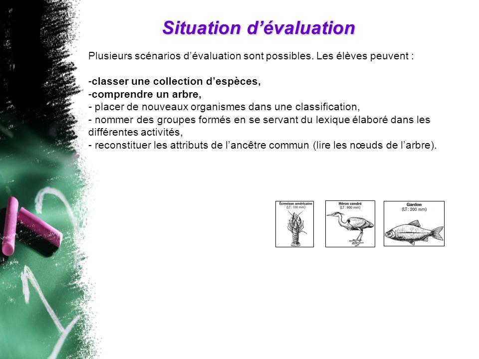 Situation dévaluation Plusieurs scénarios dévaluation sont possibles. Les élèves peuvent : -classer une collection despèces, -comprendre un arbre, - p