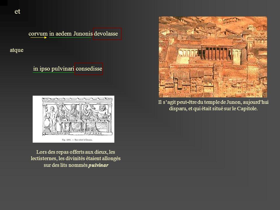 corvum in aedem Junonis devolasse et atque in ipso pulvinari consedisse Il sagit peut-être du temple de Junon, aujourdhui disparu, et qui était situé sur le Capitole.