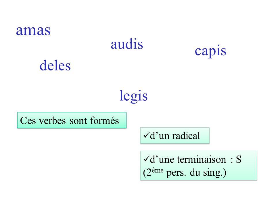amas deles audis legis capis Ces verbes sont formés dun radical dune terminaison : S (2 ème pers.
