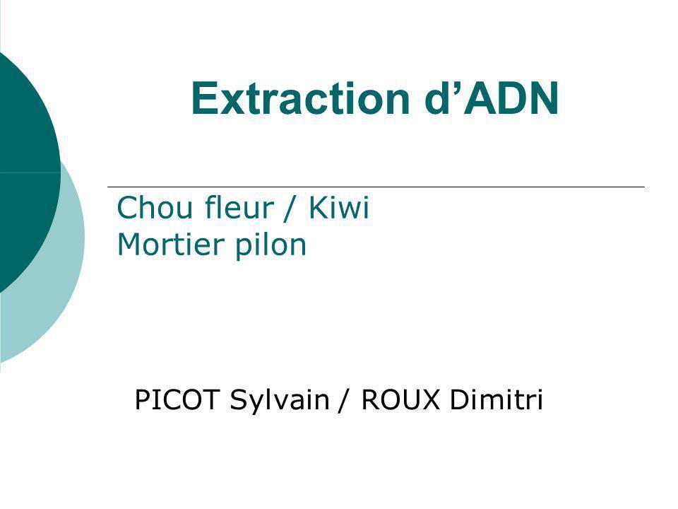Extraction dADN PICOT Sylvain / ROUX Dimitri Chou fleur / Kiwi Mortier pilon