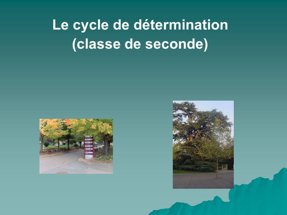 Le cycle de détermination (classe de seconde)