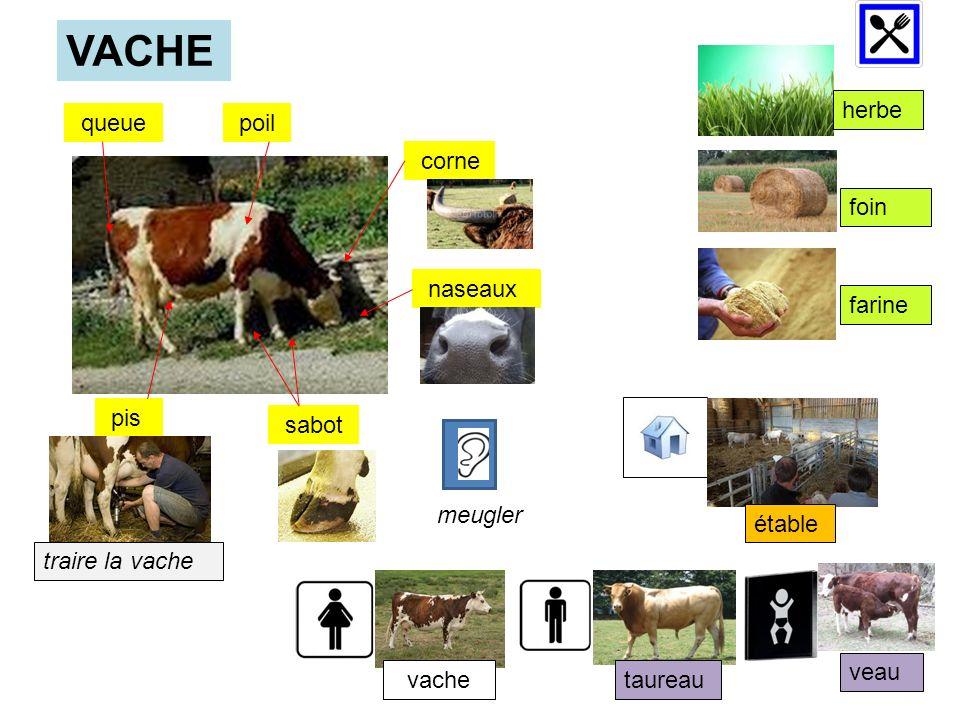 queue poil corne naseaux pis sabot VACHE herbe foin farine étable taureau veau traire la vache vache meugler