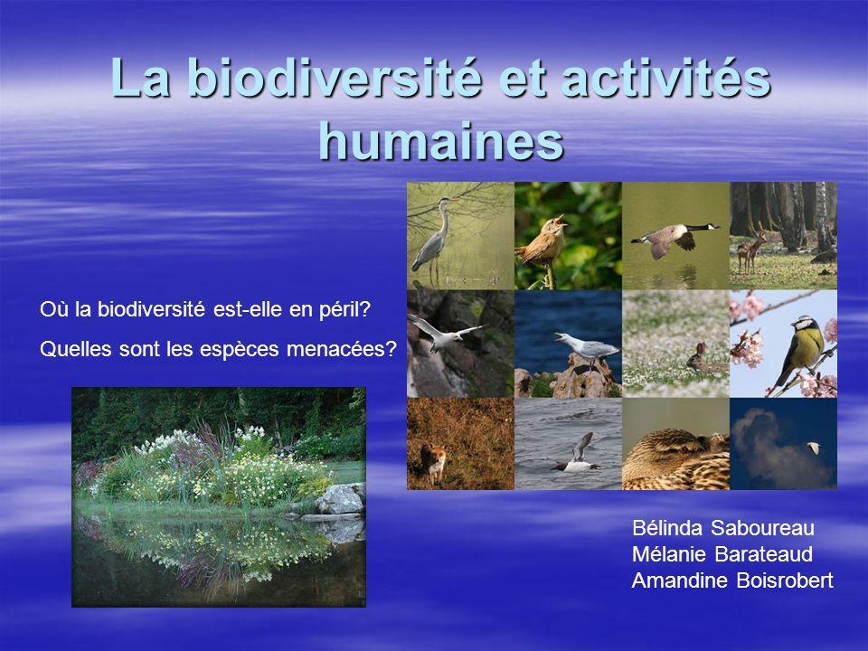 La biodiversité et activités humaines Où la biodiversité est-elle en péril? Quelles sont les espèces menacées? Bélinda Saboureau Mélanie Barateaud Ama