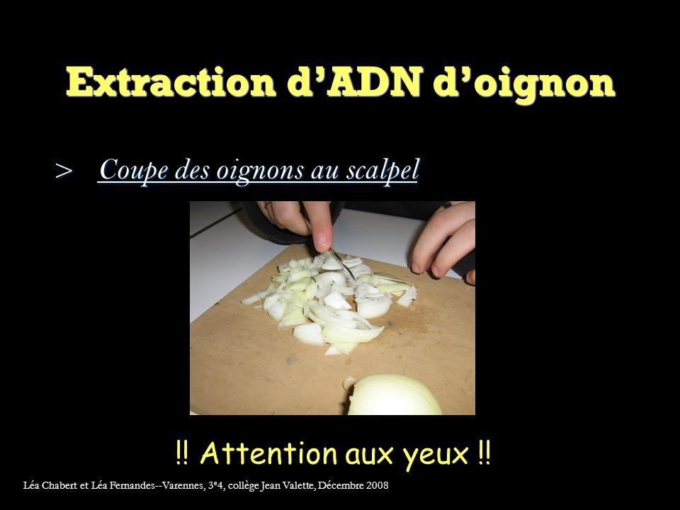 Extraction dADN doignon >Coupe des oignons au scalpel !.