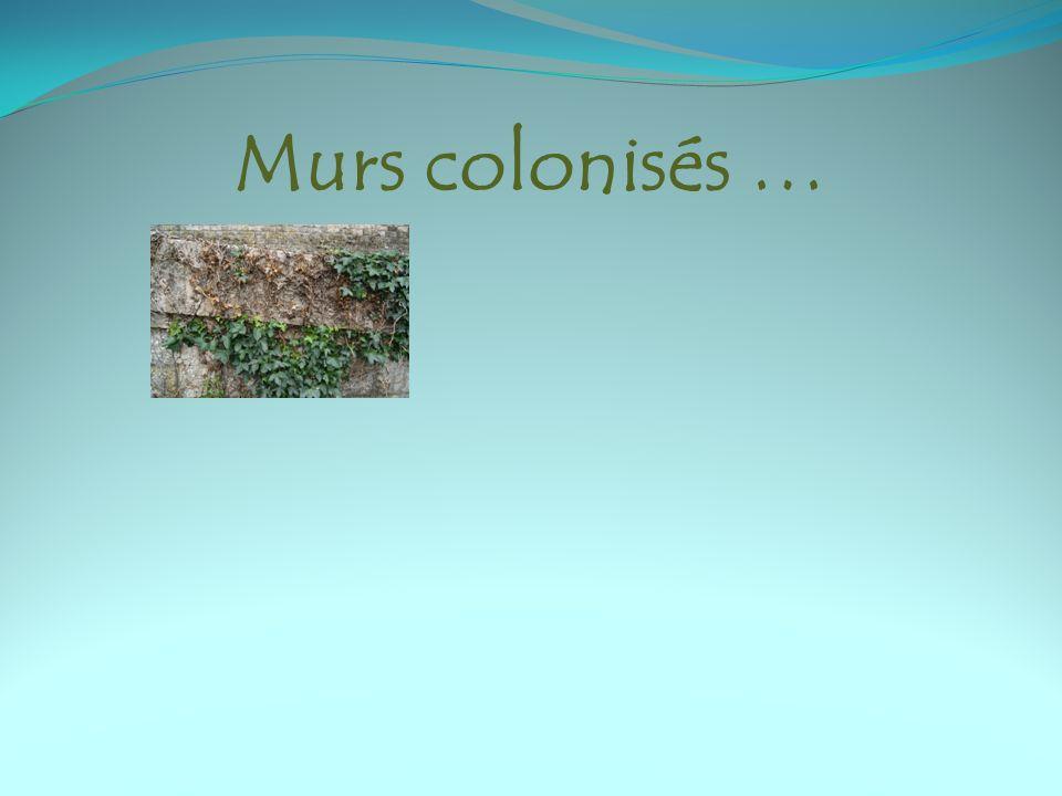 Murs colonisés …