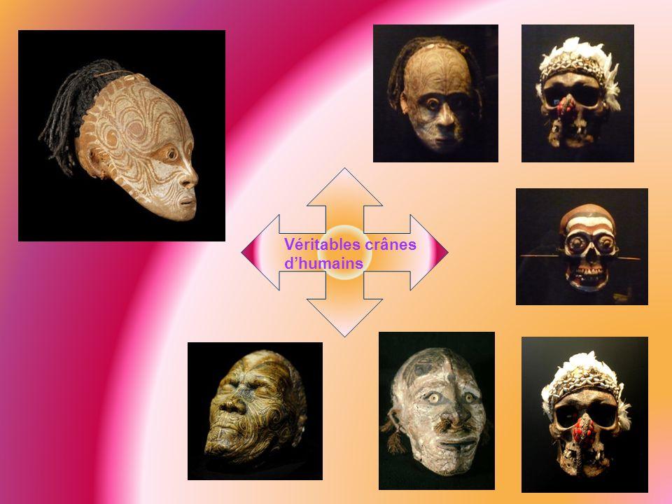 Véritables crânes dhumains