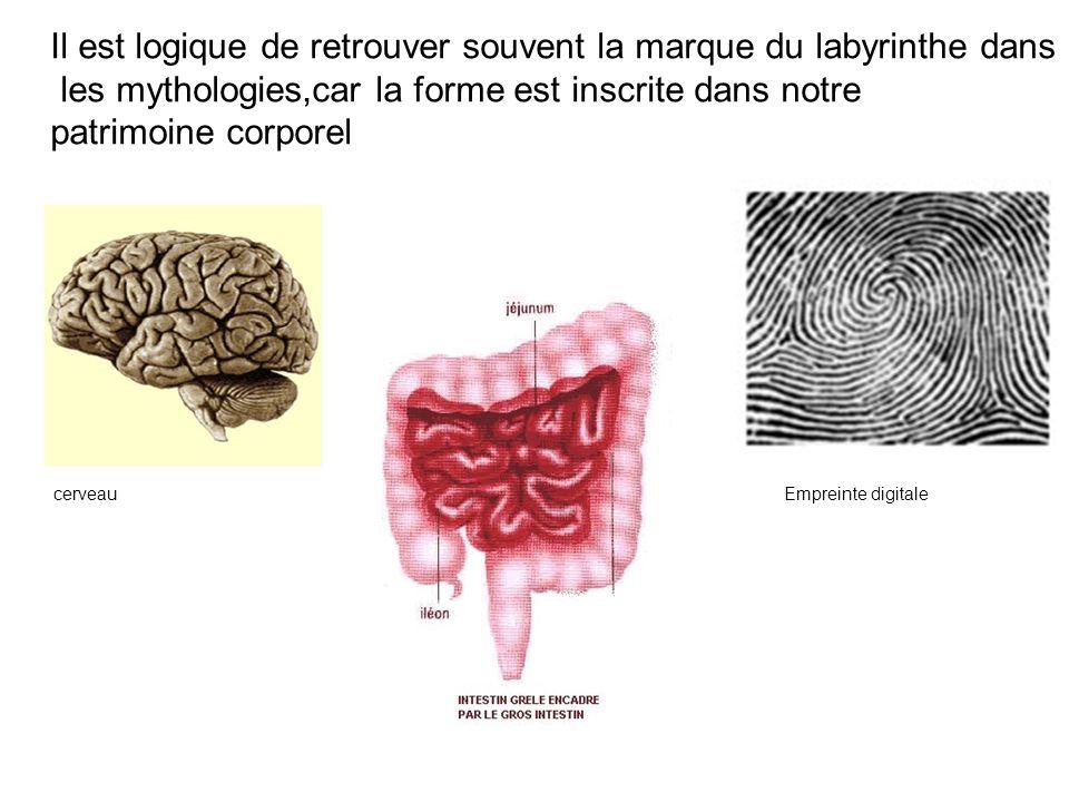 Il est logique de retrouver souvent la marque du labyrinthe dans les mythologies,car la forme est inscrite dans notre patrimoine corporel cerveauEmpreinte digitale