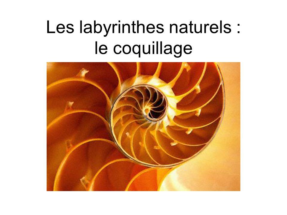 Les labyrinthes naturels : le coquillage