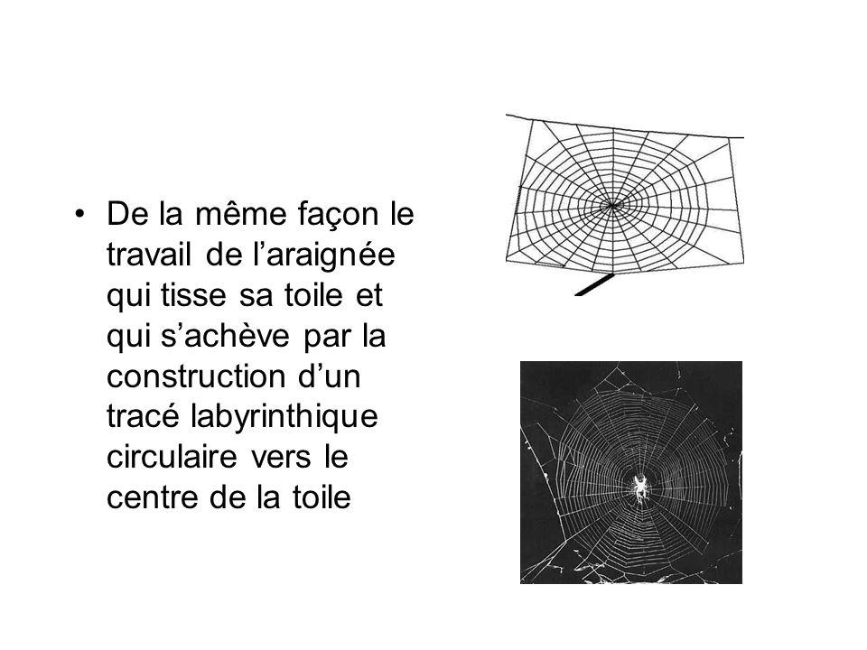 De la même façon le travail de laraignée qui tisse sa toile et qui sachève par la construction dun tracé labyrinthique circulaire vers le centre de la toile