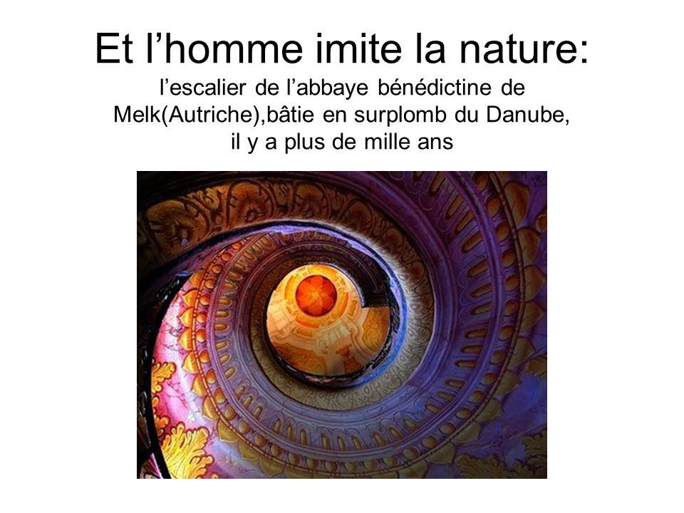 Et lhomme imite la nature: lescalier de labbaye bénédictine de Melk(Autriche),bâtie en surplomb du Danube, il y a plus de mille ans