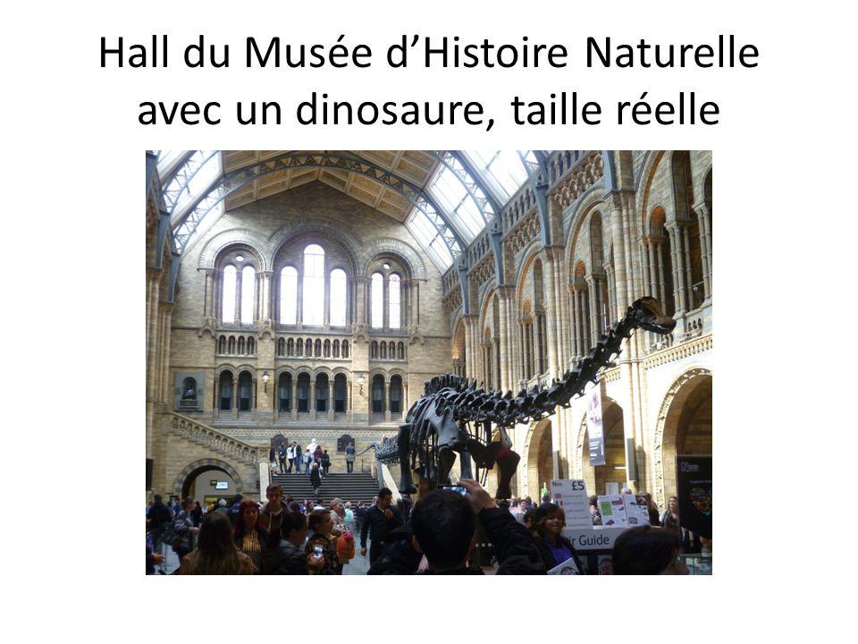Hall du Musée dHistoire Naturelle avec un dinosaure, taille réelle