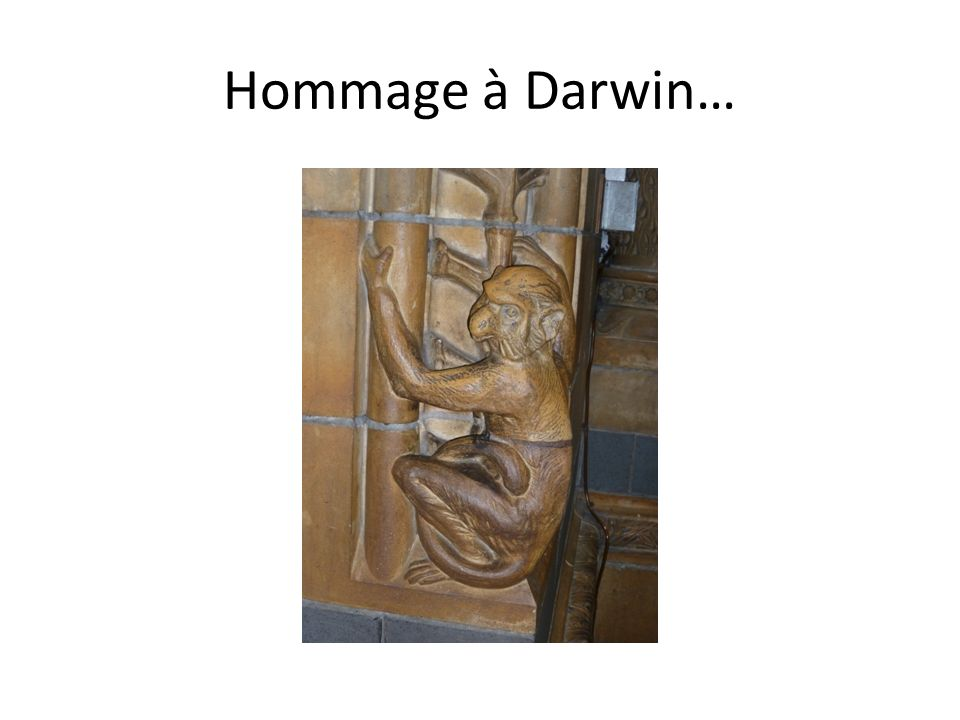 Hommage à Darwin…