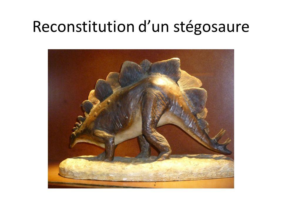 Reconstitution dun stégosaure