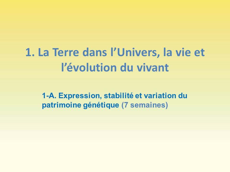 1. La Terre dans lUnivers, la vie et lévolution du vivant 1-A. Expression, stabilité et variation du patrimoine génétique (7 semaines)